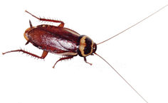 一只蟑螂的使命